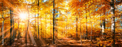 Foto op Canvas Oranje Wald Panorama im goldenen Herbst