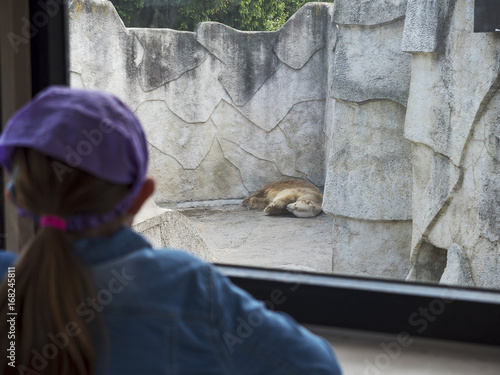 White bear in a Zoo in focus, young girl looking at the animal out of focus.