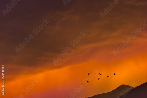 Foto op Canvas Baksteen Birds flying at sunrise over the mountains autumn concept