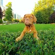 Puppy in the Park