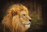 lion - 168268039