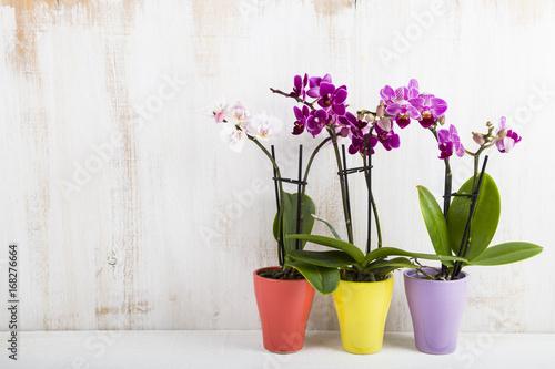 Orchid (Phalaenopsis ) - 168276664