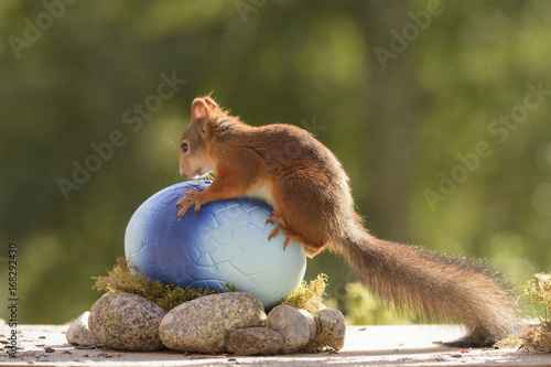 squirrel sitting on a dragon egg