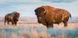 Bison in Grasslands, Canada