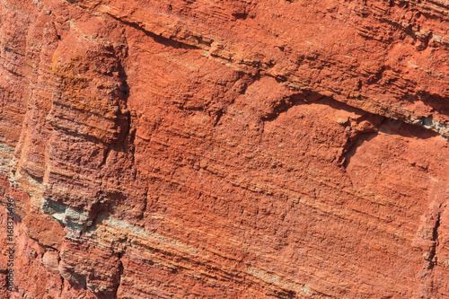 Papiers peints Corail northern gannets, morus bassanus,