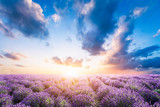 Lavender flower field at sunset - 168327635