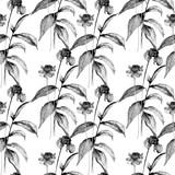 Monochrome seamless wallpaper with Summer Gerbera flowers