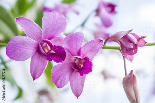 Foto op Canvas Lilac Orchid purple flowers on nice day