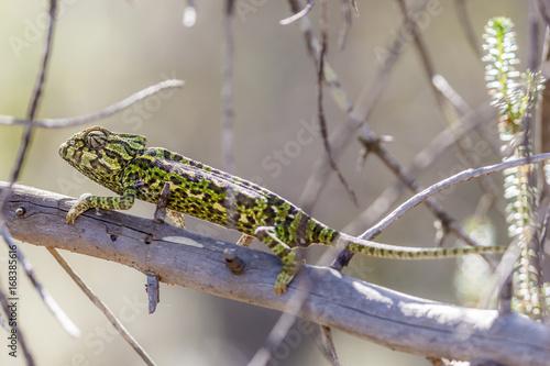 Fotobehang Kameleon Closeup of a chameleon