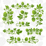 Hop decoration elements. - 168391863