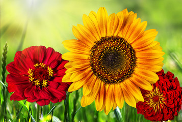 Beautiful colorful flowers in the field,natural  background