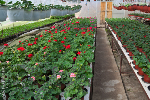 Poster Plant nursery in greenhouse