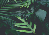 Real leaves with white copy space background.Tropical Botanical nature concept design. - 168439848