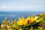 Fleur exotique face à la mer - 168472443