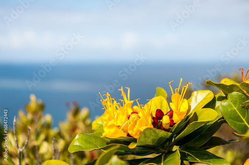 Fleur exotique face à la mer Poster