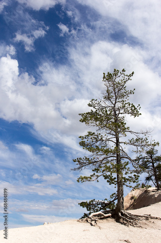 Papiers peints Route 66 Baum Blauer Himmel Bryce Canyon