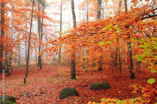 Foto op Canvas Baksteen birch tree forest
