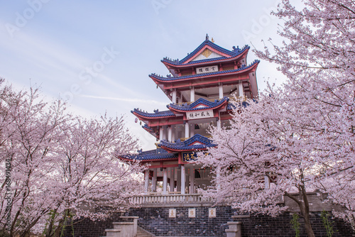 Tuinposter Lavendel cherry blossom in Chinese traditional garden