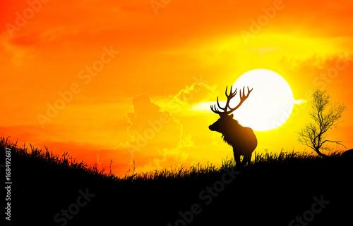 Fotobehang Hert Silhouette of a deer on meadow during sunrise