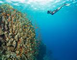 Snorkeling woman exploring beautiful ocean sealife, underwater photography. - 168495457