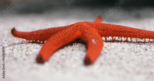 Starfish using tentacles to move around