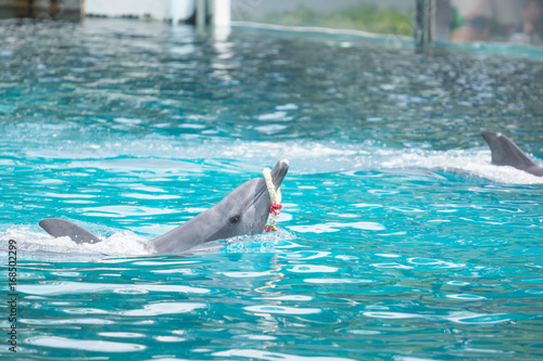 Fotobehang Dolfijn animal