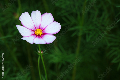Very beautiful violet flower against the background of a flowering garden