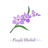 Colorful watercolor texture vector botanic garden flower purple orchid