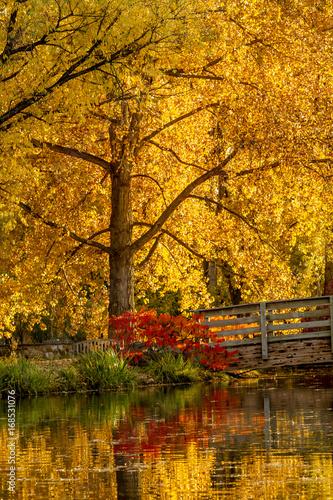 Papiers peints Automne Fall Colors in Outdoor Park