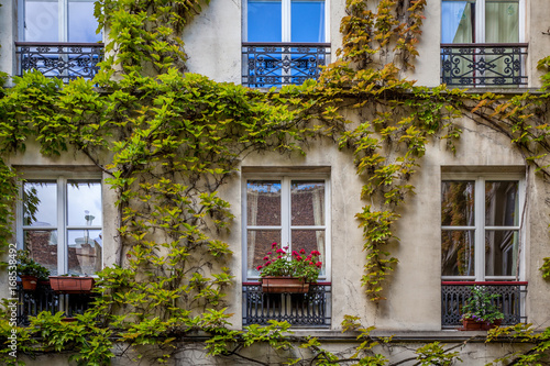 Wall mural French Windows and Ivy Vines