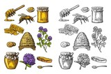 Honey set. Jars of honey, bee, hive, clover, honeycomb. Vector vintage engraved illustration - 168542667