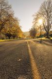 Autumn roads New Zealand - 168550875