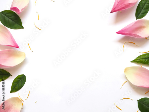 Top view of lotus petals with green leaves and yellow pollen on white background - 168556853