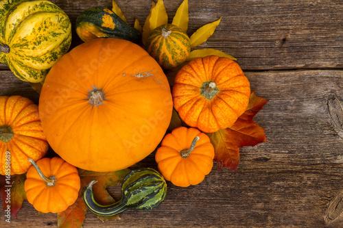 harvest of orange raw pumpkins harvest on table, top view