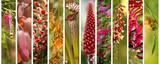 Australian plants set panoramic view - 168559610