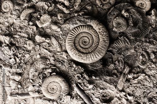 Fossils in rock Plakat