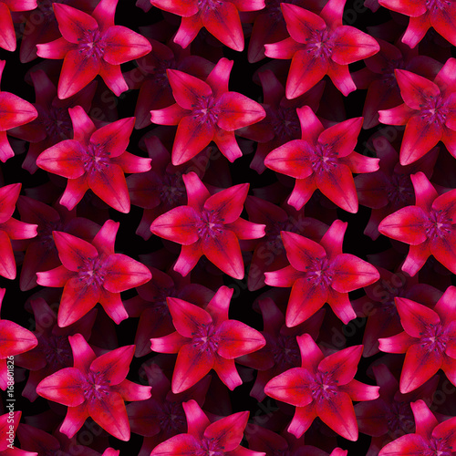 Lily Red pattern seamless. Beautiful flower background - 168601826