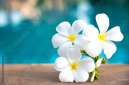 Fotobehang Plumeria Tropical frangipani white flower near the swimming pool, flower spa. Copy space.