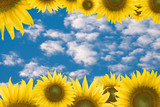 Blue sky background with yellow flower.