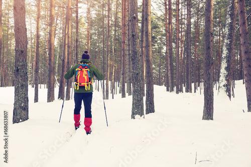 obraz lub plakat backcountry skier in snowy forest