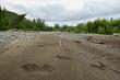 Bear footprints in sand on Alaskan river bed