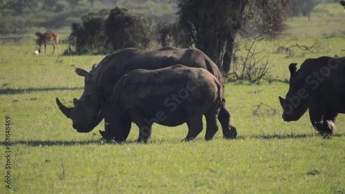 Rhinos in Nairobi National Park