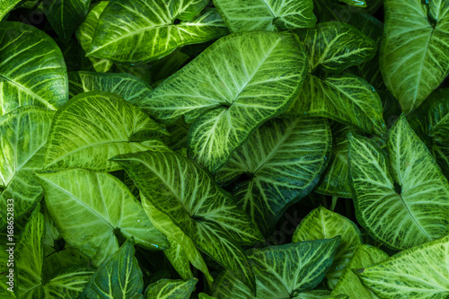 leaves background,foliage abstract pattern,forest leaves wallpaper,garden decorative