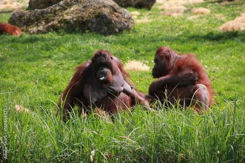 Plakat zoo beauval animaux liberté