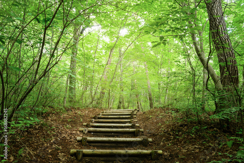 Fotobehang Lime groen 森の中のハイキングトレイル