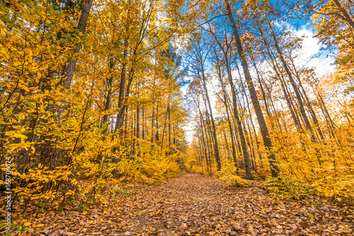 Papiers peints Melon Path through yellow forest in autumn, landscape
