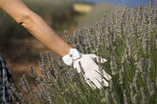 Woman and Lavender Poster