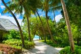 Close up image of beautiful tropical garden with palm, calathea, strelitzia. - 168780464