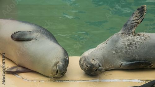 Aluminium Noordzee schlafende Seehunde