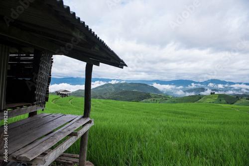 Fotobehang Rijstvelden empty terrace in the green rice field